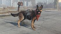 Dogmeat equipped items