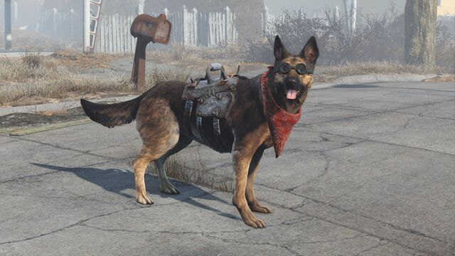 File:Dogmeat equipped items.jpg
