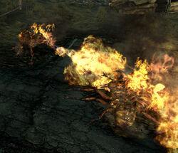 Frenzied fire ants.jpg
