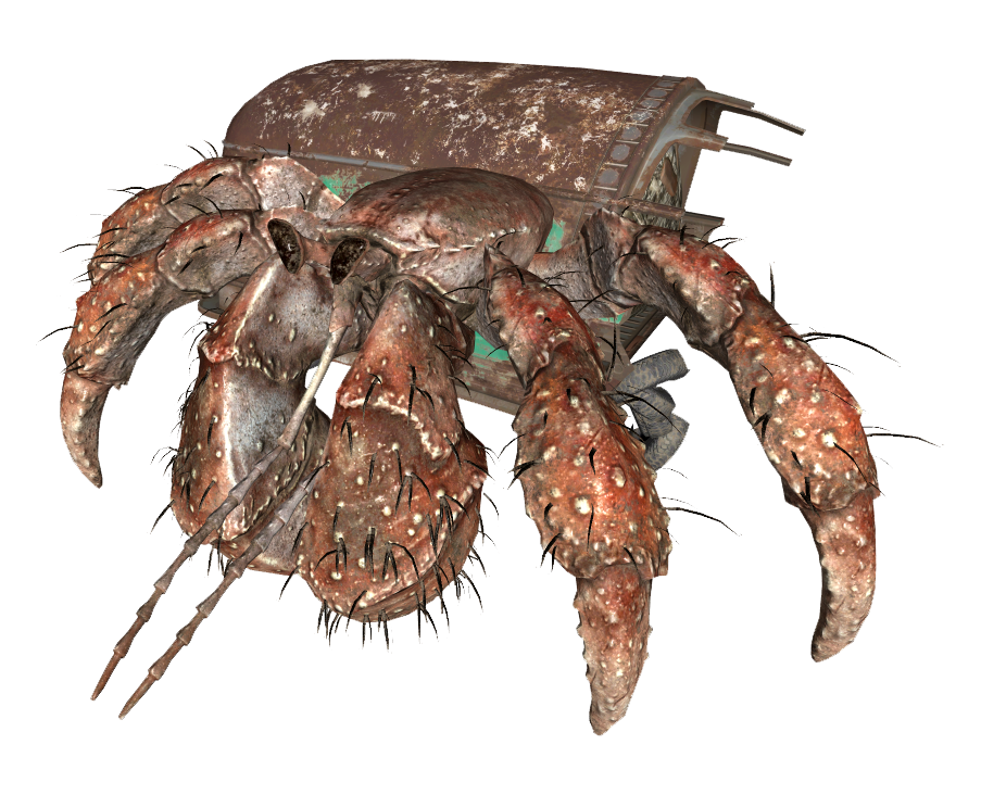 hermit crab fallout wiki fandom powered by wikia