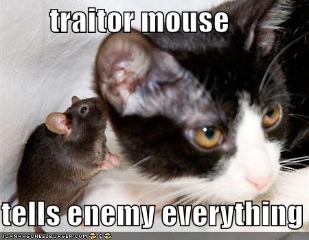 File:Funny-pictures-traiter-mouse-whispers-cat.jpg