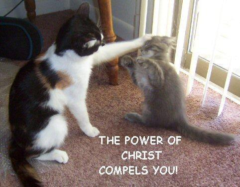 File:Power-of-christ-compels-you-cat.jpg