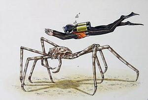 Spider Crab Diver