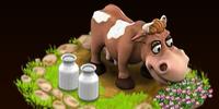 Ayrshire Cow