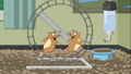2 hamsters.png