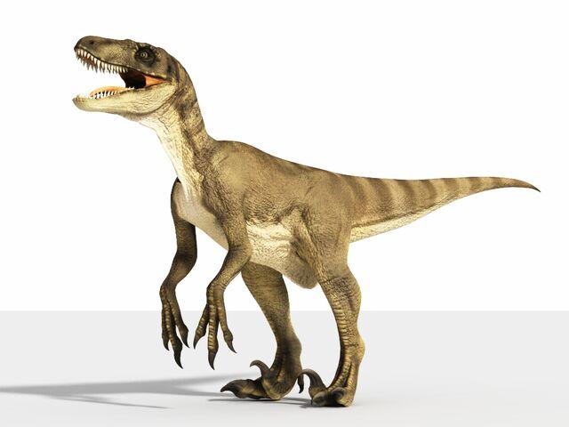 File:Pictures-of-Velociraptors.jpg