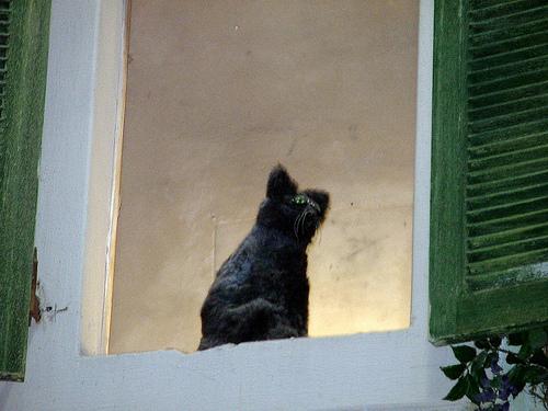 File:The Montecasino Cat.jpg