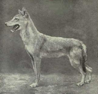 File:Egyptian Jackal.jpg