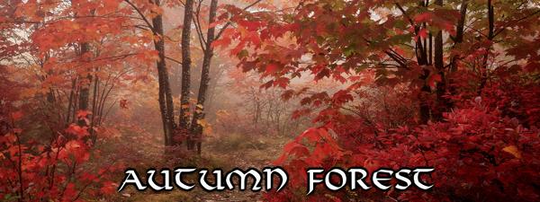 CeR Autumn Forest