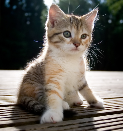File:Cute baby kitten.jpg