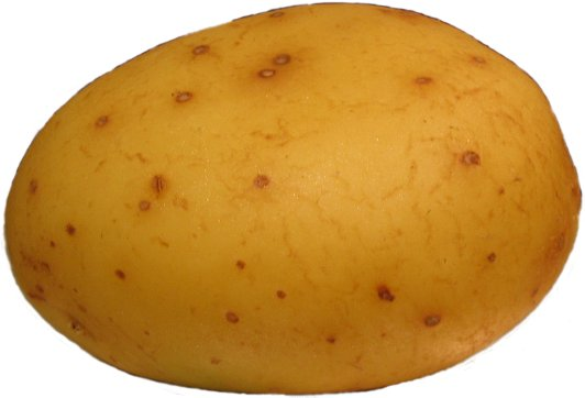 File:Potato.jpg