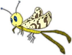 735 - MO - Moptera