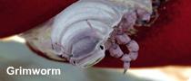 File:Grimworm.png