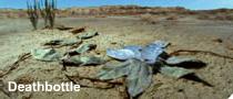 File:Deathbottle.png