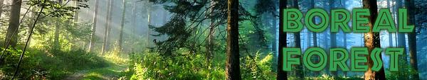Borealforest biome