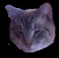 Marleycat