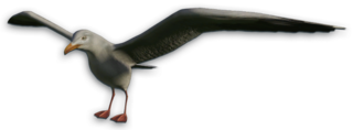 FC3 cutout seagull