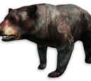 Undying Bear