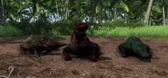Blood Komodo