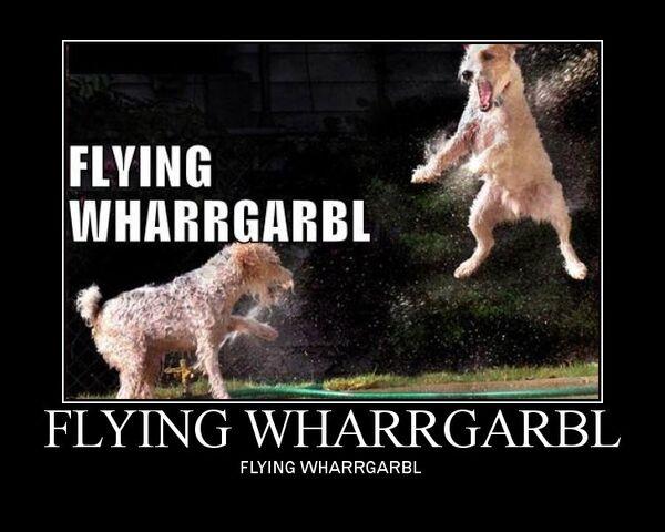 File:Flying wharrgarbl.jpg