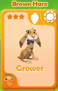 Grower Brown Hare