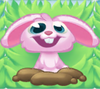 Rob the Rabbit on grass