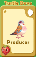Producer Turtle Dove A