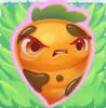 Carrot grumpy on grass