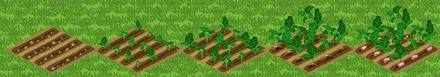 File:Beets Growth.jpg