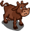 Found Brown Cow