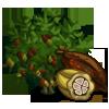 Cocoa Tree-icon