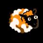 Two toned Ewe