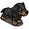 Dachshund Puppy Black-icon