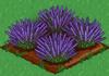 Lavender 100.png