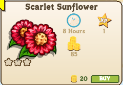 Scarlet Sunflower Market Info
