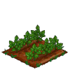 Super Black Berries 33-icon.png