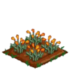 Golden Poppy 66.png