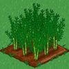 Asparagus 100.png