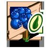 Organic Blueberry Mastery Sign-icon