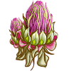 Rare Afgeki Flower-icon