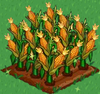 Corn extra100.png