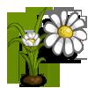 White Daisy-icon