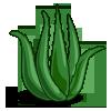 Aloe Vera-icon