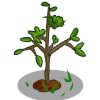Mystery Seedling-icon.png