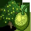 Breadfruit Tree-icon.png