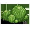 Cactus Cluster-icon