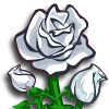 White Rose-icon