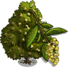 Bay Laurel Tree-icon.png