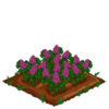Lilac 100