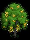 Indian Laurel Tree2-icon